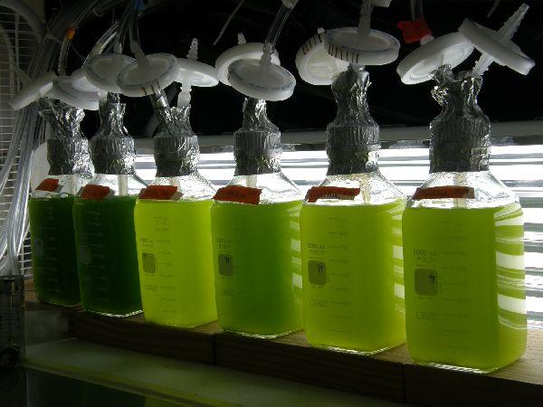 Biofuel produced from algae