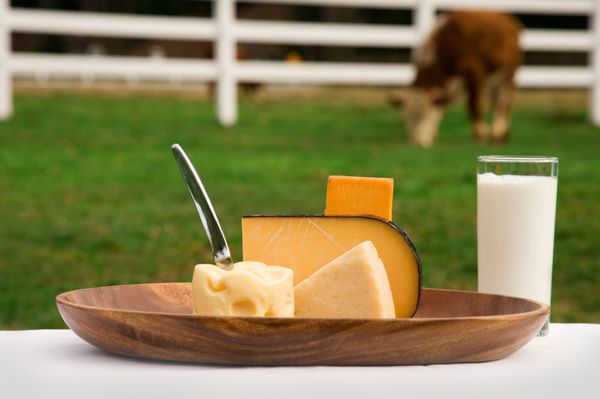 dairy-products-and-cow-on-farm
