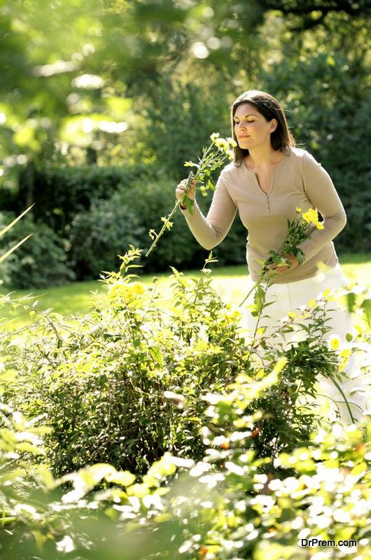 boost-your-organic-garden-3