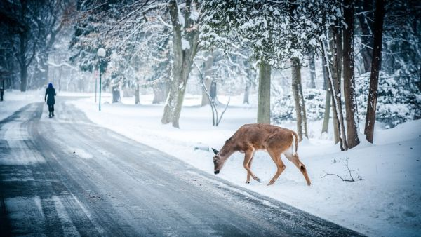 deer-come-out-of-the-jungle