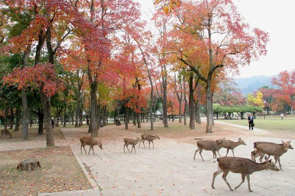 entire-herd-of-deer