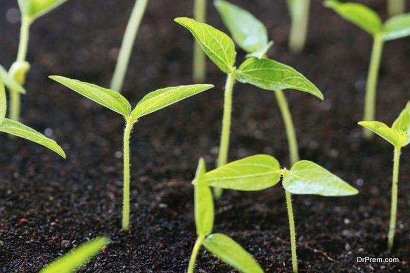 Sustainable farming techniques