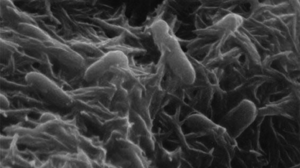 1Bacteria to create fuel from sunlight and CO2