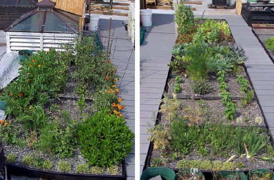 2008 05 21 rooftopgarden GFo1Q 17080