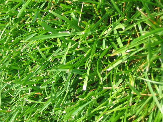 800px wiki grass