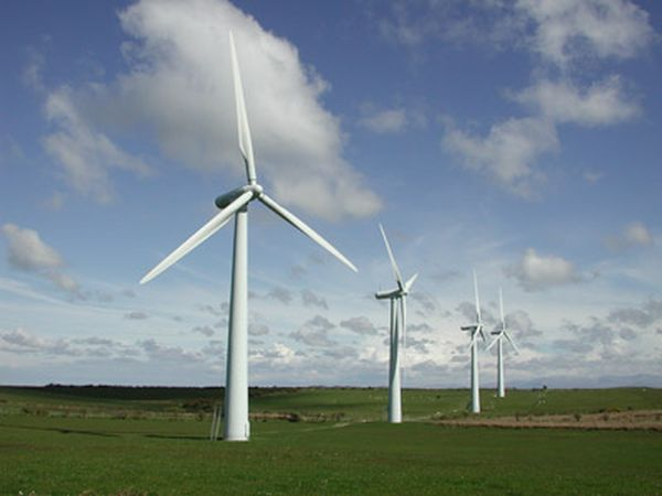 A bio-inspired approach to enhancing wind power conversion
