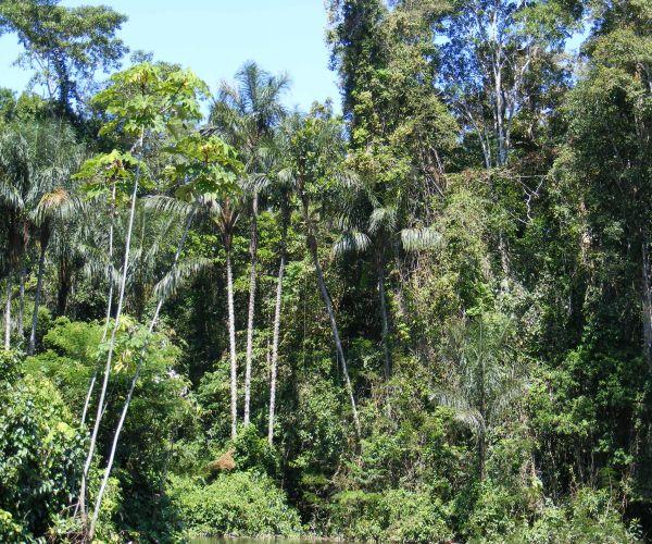 Amazon rain-forest