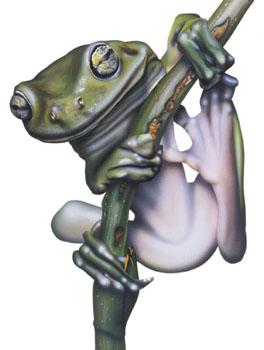 australian tree frog