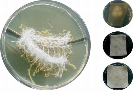 bacteria fabric 3