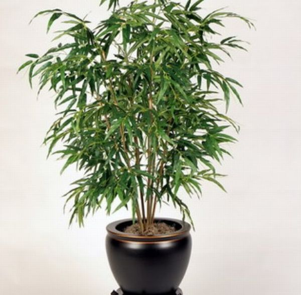 Best air purifying indoor plants for green homes and for Office plants no natural light