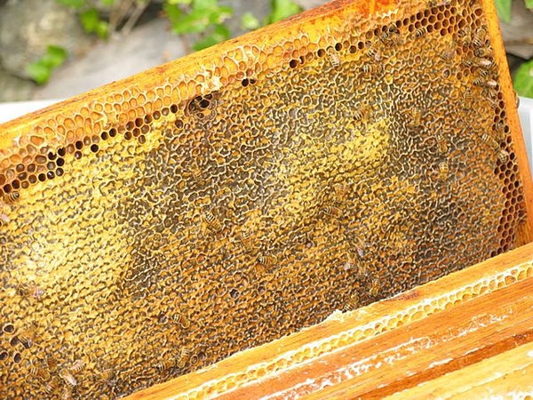 Bees and diversity