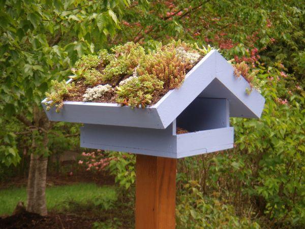 Birds Green Roof