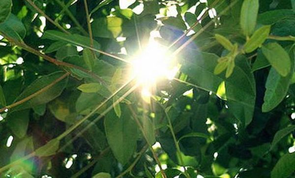 Breakthrough Rivals Speed of Natural Photosynthesis