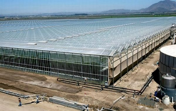 Camarillo's greenhouses