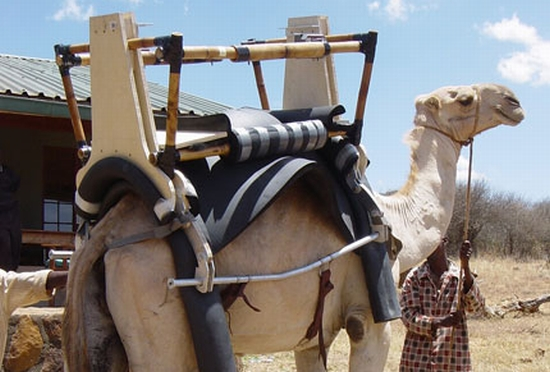 camel mobile clinic 1