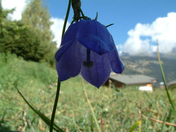 Climate change impacts Europe's mountain plants