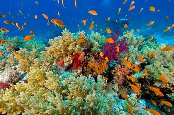 Coral resilience to ocean acidification
