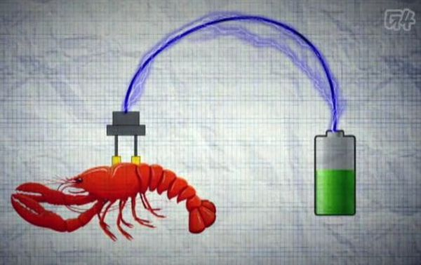 Cyborg Lobsters Could Produce Electricity for Bio-Medical Applications