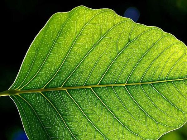 energy using artificial photosynthesis