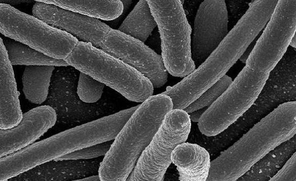Engineer bacteria