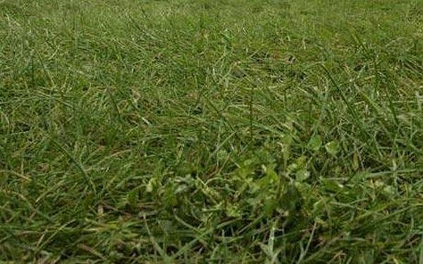 Garden waste to transform into biofuel