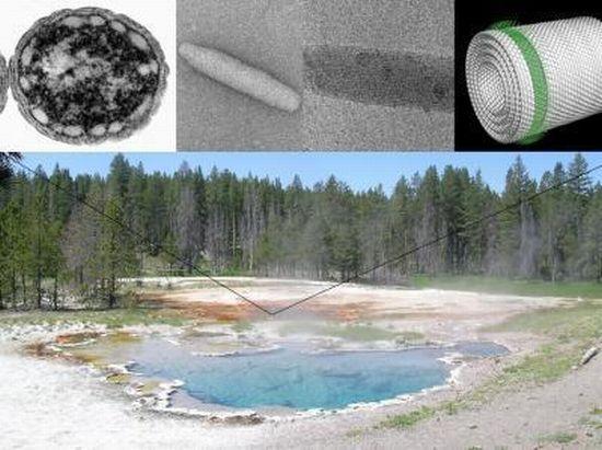 green bacterai