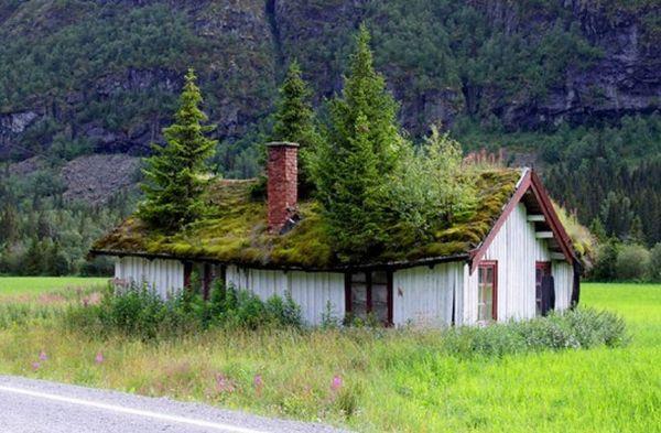 15 most creative green roofs ecofriend
