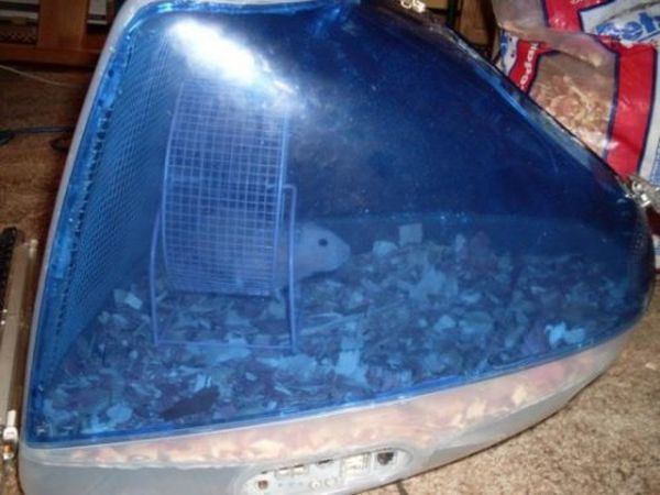 IMac as a Hamster Cage