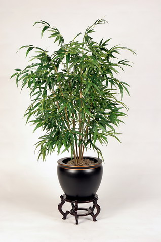 Best Air Purifying Indoor Plants Ecofriend
