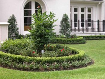 maintaining manicured lawns need lots of water