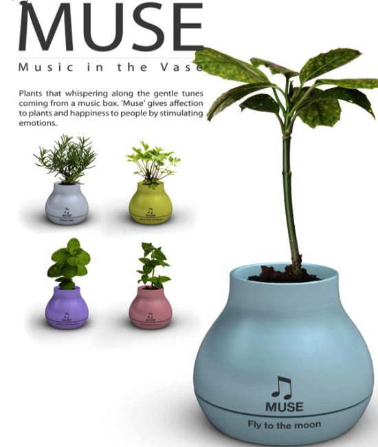 muse musical vase 5
