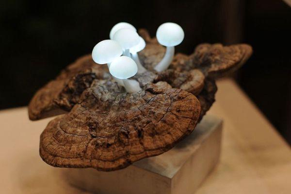 Mushroom lights in reclaimed wood
