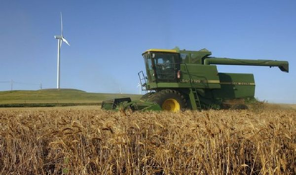 New variety of salt-tolerant wheat could help address food shortages