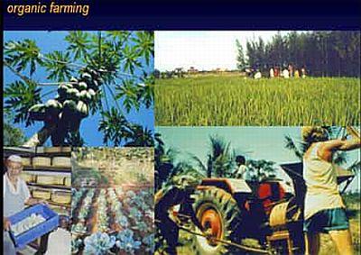 organic farming 1822
