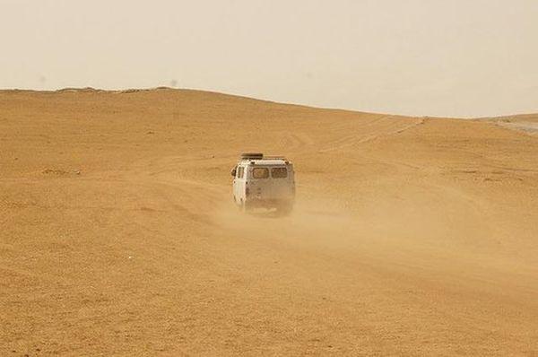 Planting Trees in the Mongolian Desert