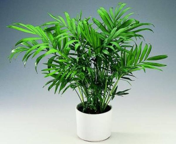 5 Indoor Plants Serving As Natural Air Purifiers Ecofriend