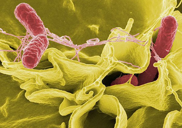 Researchers look towards microbes for renewable energy generation
