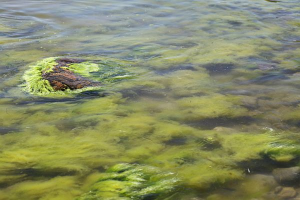Roman Bath Algae