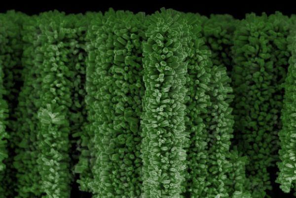 Solar energy-harvesting nanotrees