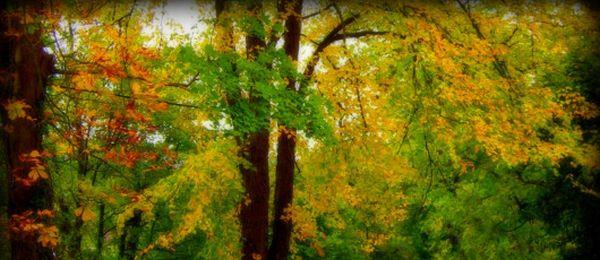 Tree electricity