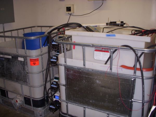Two-in-one device uses sewage as fuel