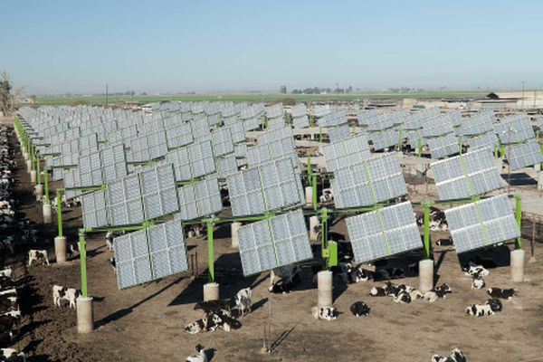 World's First Cattle Feedlot Solar Field