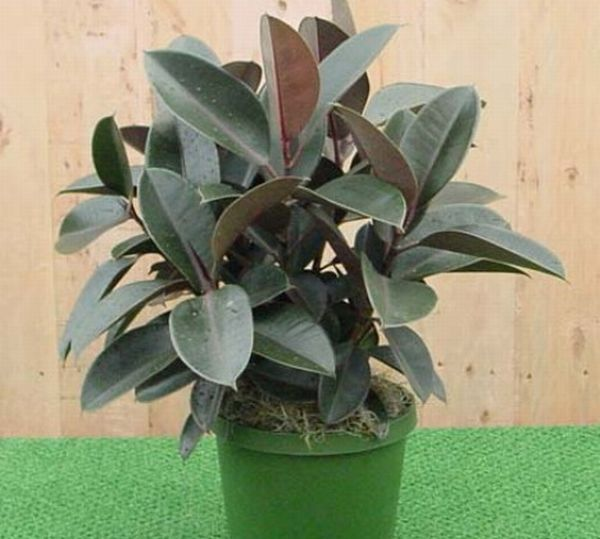 Best Air Purifying Indoor Plants For Green Homes And