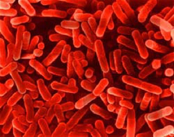 ways bacteria can be used to help better the environment