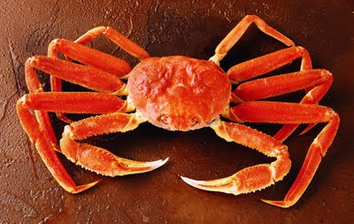 Environmentally Friendly Snow Crab Sustainable Seafood