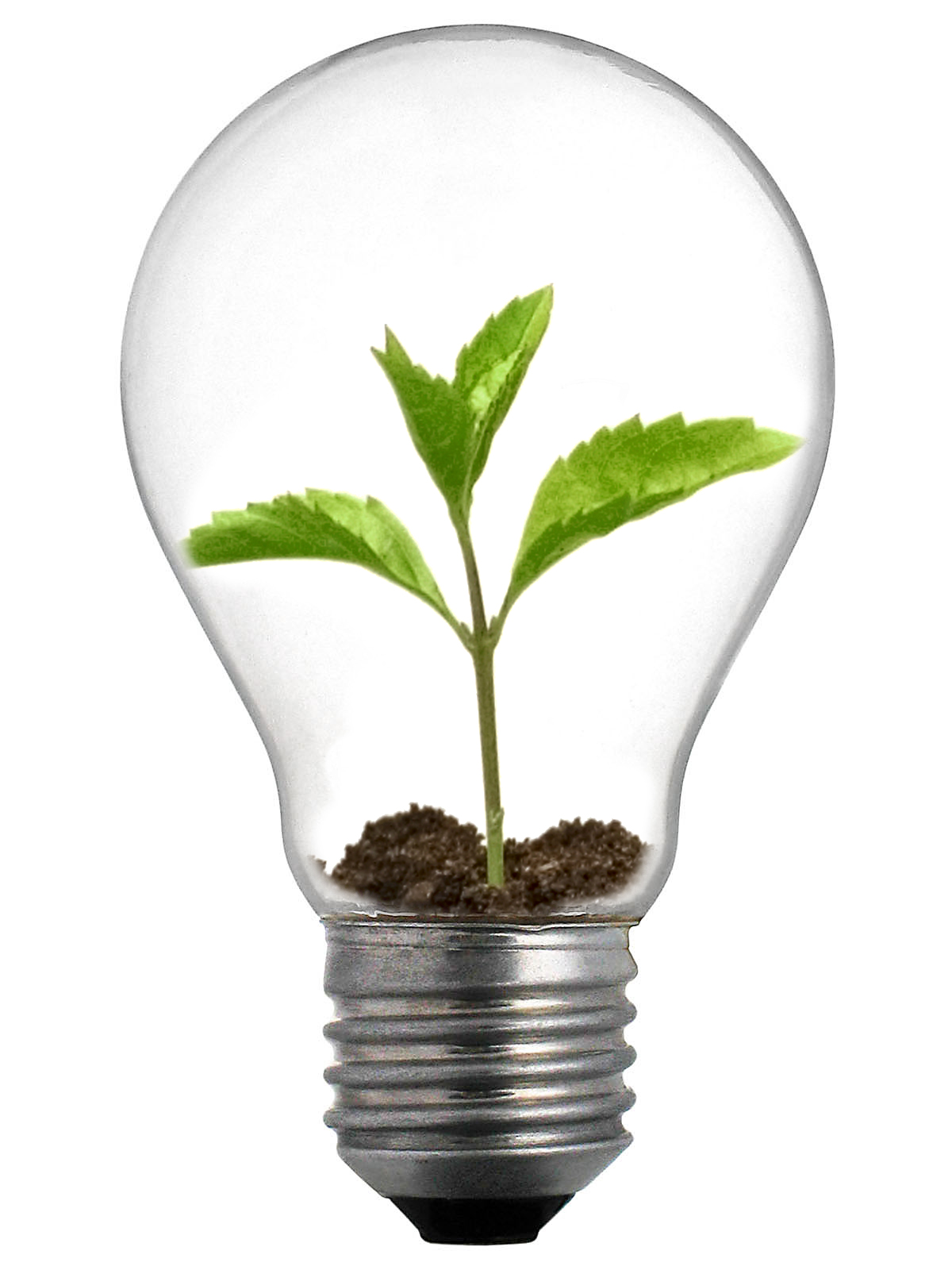 New range of light bulbs from bulbrite ecofriend - Eco friendly ideas ...