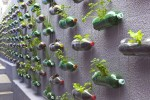 recycled-bottle-garden-1