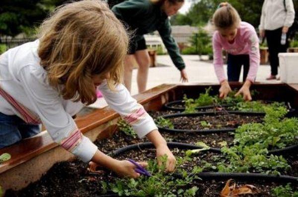 Raleigh-Park-school-garden