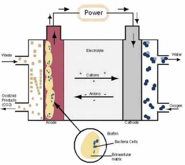 microbial_fuel_cell