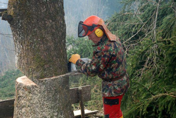080331_cutting_trees_19_rkk_send